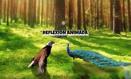 Animación CRISTIANA Fabula del Aguila – Reflexion